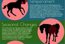 Equestrian Fact Sheets