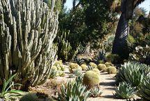 Cactus e paisagens