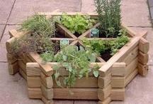 Garden Planters / by Primrose