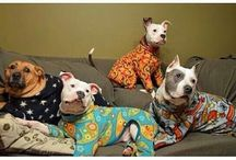 awesome pitty's