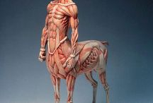 Referência: Anatomia Fantástica