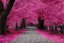 Pretty Pink Please!!!