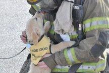 Lila - service dog info D.A.D.