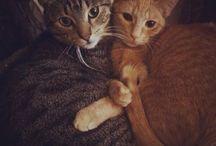 Cats'