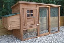 chicken coop ideas / by Deanna Wagner