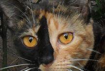 Cat face / taken at depok (Idul fitri 2014)