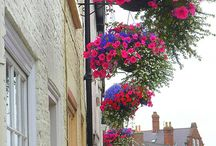 Hanging Baskets-Container Gardening ❤
