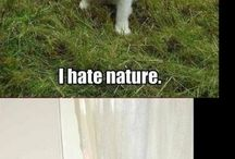 funny animal pics