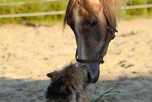 Stald Ramses Horses
