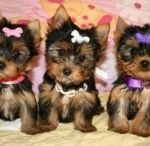 Puppies/Doggies / by Bella Montoya