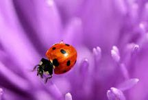 Imagenes de ladybag
