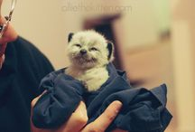 Kittens ^^ / everything cat-related :)