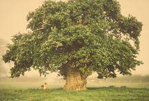 VR TREE