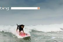 Surfing using Bing is dangerous  / You surf keywords using google, yahoo like search engines, but have you ever thought this kind of search engines could be very much dangerous for you.. / by Dhavni Jani