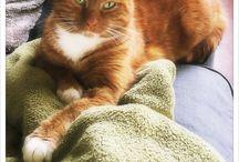 Kattenspam / Katten