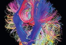 Our Beautiful Brains / With advances in modern technology, neurologists are able to see deeper and closer than ever before at the human brain and its tangle of neurons and their billions of connections. The images in this folder are of our beautiful brain in all its glory