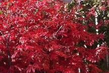 My Garden 2013