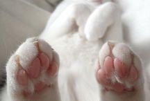{CAT LIFE}