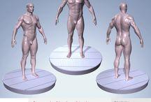 Portfolio Animum 3d school / Estudio de la anatomia humana