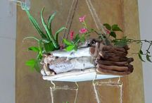 pokojové rostliny / kytky