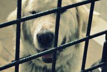 Pomoc / Chcesz wesprzeć zwierzaki w schronisku? Zerknij tutaj i dołącz do naszej drużyny :)