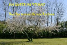 QUETE DU VIVANT = quête de Soi / sur le blog de Francesca http://quetedesoi.unblog.fr/