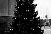 Cats / Meow.