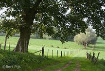 Landschap paden