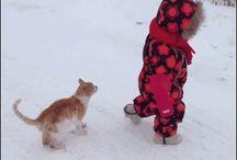 Котики и другие