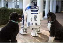 First Dog Bo and Sunny Obama