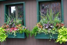 Květiny balkónové