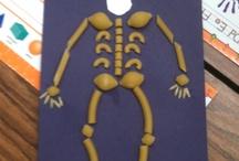 human body grade 1