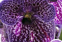Orchids / by Rhonda Jean Dearden