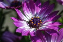 COLOR THERAPY/ Purple