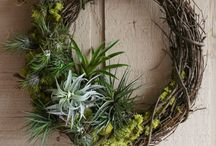 Ideas for Air Plants