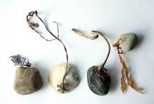 Beautiful Seaweeds / Inspiration and art from seaweed