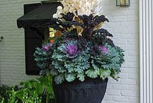 Container Gardening / All the urns and boxes and tubs ,baskets and buckets can hold green and growing wonders.