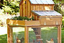 Rabbit chicken houses