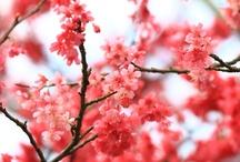Flower Power / by Kathleen - Travel Blogger