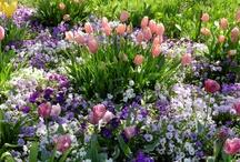 Zestawienia kwiaty