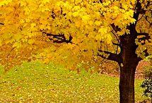 ** Árvores **