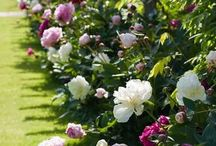Blommor insperation