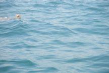 Padre Island Wildlife