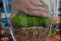 Living Arrangements & Garden DIY / Ideas for the potential future Garden Gift Shop! / by Cynthia Bee