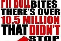 Pit bulls <3