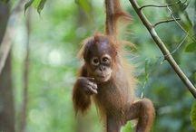 Monkeys!!!! / I love monkeys, idk why?
