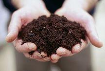 Gathering Gardening Advice / Gardening Tips / by Deborah G.
