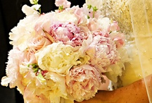 Rachel Jubb / June 2015 - Soft blushes in pastel shades such as champagne, peach, shell pink, powder blue, lilacs, soft creams.