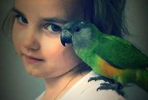 Senegal parrot therapy bird Mika / Therapy bird Mika www.facebook.com/hug4joy