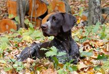 Dogs In Autumn / Pumpkins and warm colorful leaves are everywhere - talk about a perfect setting to snap a shot of your dog! Check out some of our favorite photos of dogs in autumn. / by American Kennel Club